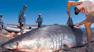 Рибарите кои го фатија мако