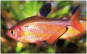 Аквариум риба