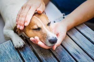 Алергии кај кучиња: симптоми, дијагноза, третман, превенција