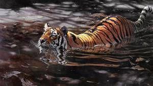 Сибирскиот тигар не се плаши од вода