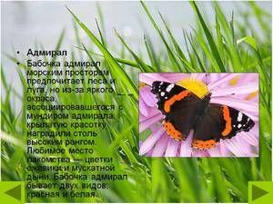 Пеперутка адмирал: опис, пролетна форма, карактеристика на видот