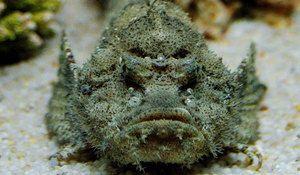 Wartow, овој рибник кој живее во водите на океаните