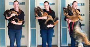 До кои возрасни кучиња растат, физиолошки развој