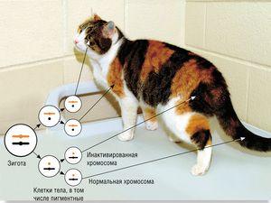 38 хромозоми кај мачки