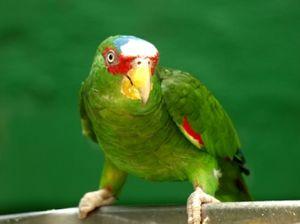 Светот на папагалите