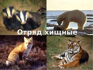 Грабнувачки цицачи: опис и видови