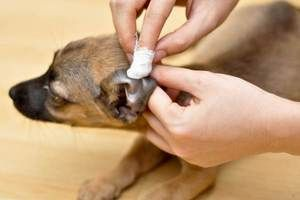 Инструкции за употреба Fungin за кучиња и мачки