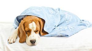 Ентеритис кај кучиња: симптоми и третман