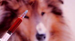 Спроведување на евтаназија на животното