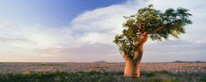 Што сонува сон дрво?