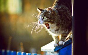 На која возраст мачката почнува да оди