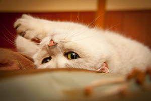 Средства за мачки во еструс