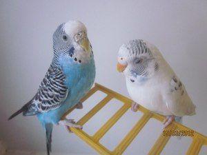 Име за папагалот