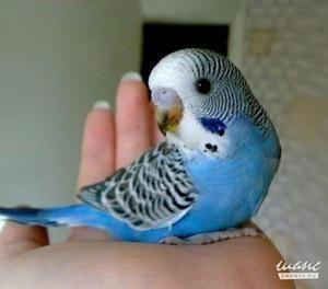 Како да излезе со име за папагал