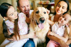 Како да се преживее смртта на куче, совети