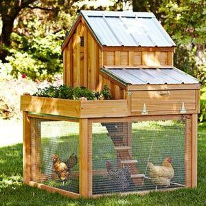 Како да се изгради кокошарник од себе: тајни на аранжманот