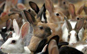 Како да се грижи за зајаците: опис и карактеристики на нега