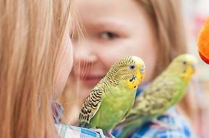 Девојчето и папагалот
