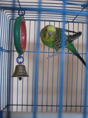 Избор на кафез за папагал