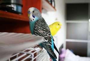Неколку папагали