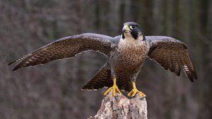 Која птица е најбрза во светот