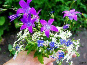 Што шумски цвеќиња растат добро на нашите цветни леи