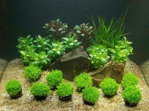 Нутритивниот буквар во аквариумот