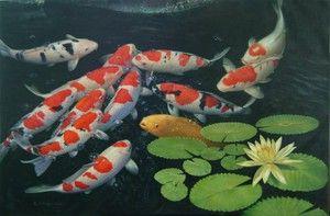 Карпи кои: содржина во езерцето и главните карактеристики