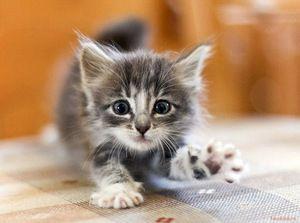 Хранење мала маче
