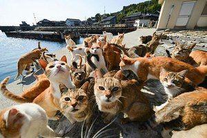 Мачки и нивните болести. Симптоми, нега, третман
