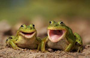Кои јадат жаби и што јадат во нивното природно живеалиште