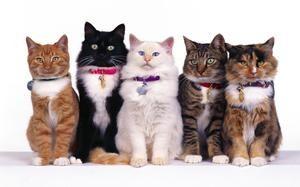 Подготовки за мачки