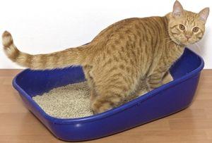 Уролитијаза кај мачки: причини, симптоми и третман