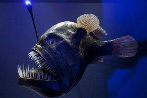 Риба риболовец живее длабоко
