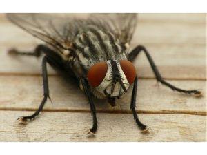 Навики на шепите кај муви