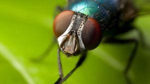 Како да се мие муви со шепи