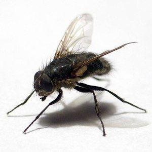 Шепите на мува на телото