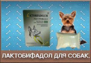Карактеристики на употребата на лактобиофадол за кучиња