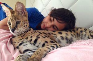 Карактеристики на одржување на мачка serval дома