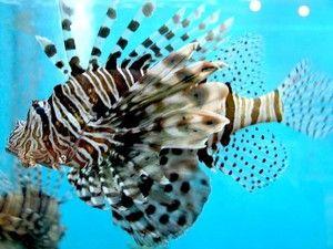 Особености на животот на рибите на лилјанка