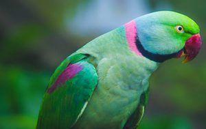 Паракет или птица птица