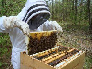 Пчеларство за почетници: совети и трикови