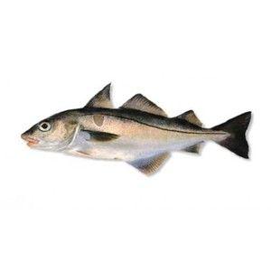 Хеддок - опис на рибите и неговата кулинарна вредност