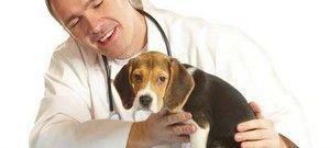 Добрите и лошите страни на кастрацијата на кучињата