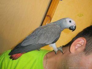 Како да го задржите папагалот топло