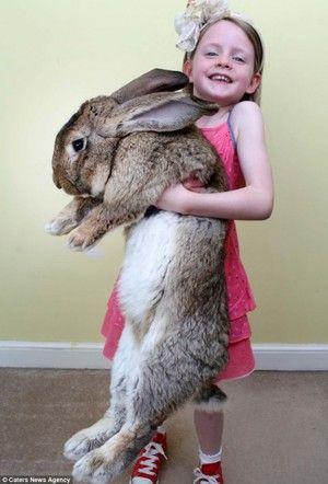 Раса зајак