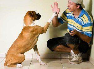 Правилна обука за кучиња дома