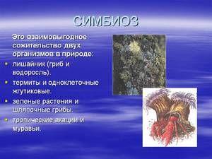 Примери и опис на симбиозата кај живиот свет