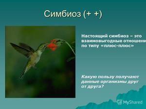Симбиоза меѓу животните