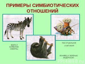 Примери на симбиоза
